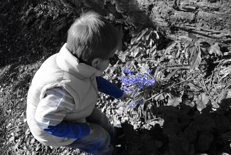 boy in a blue top picking a blue flower
